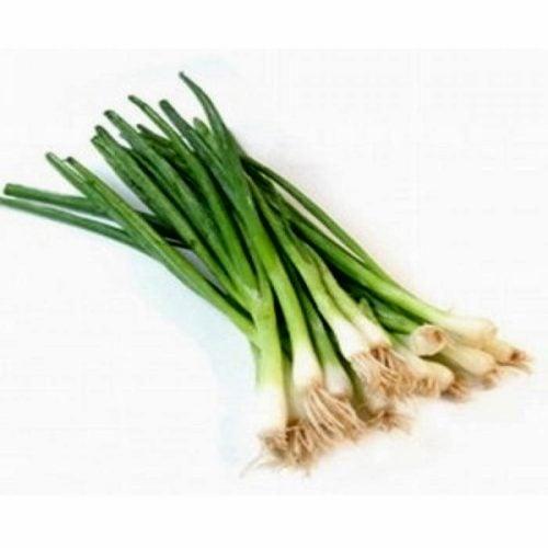 feast ceapa-legatura verde takii-Seeds