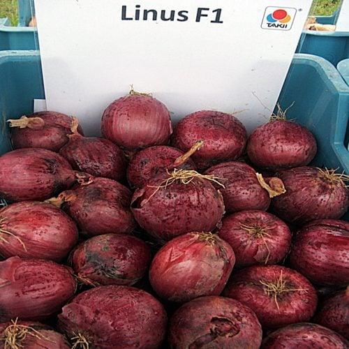 linus-f1 ceapa rosie Takii