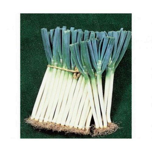 long-white-koshigaya ceapa-verde legatura Sakata