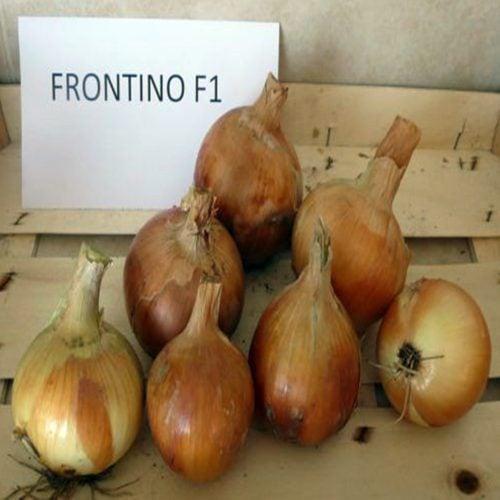 frontino-f1 ceapa galbena Hazera