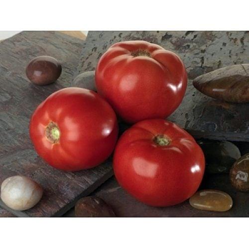 bellarosa-f1 tomate determinate Sakata