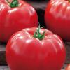 big-beef-f1 tomate-nedeterminate Seminis