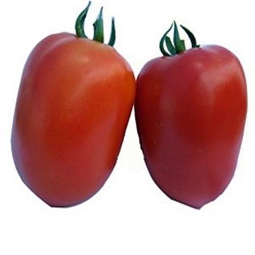 galilea-f1 tomate semideterminate Hazera