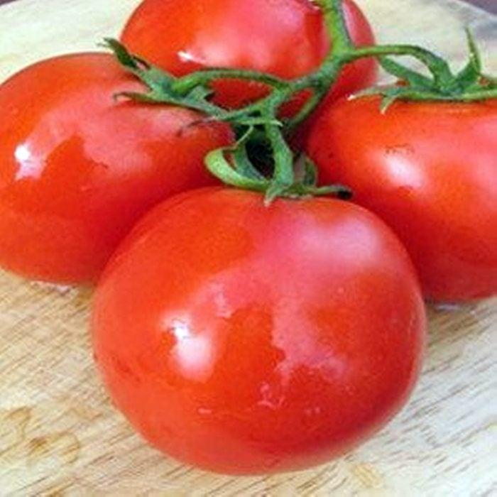 Lugas-f1 tomate nedeterminate Zki