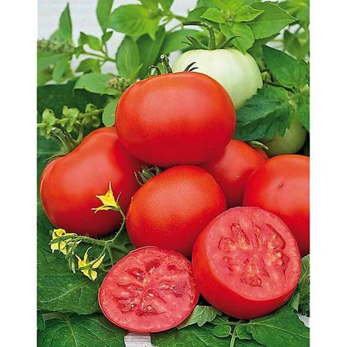 amapola-f1 tomate determinate Sakata