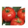 jastis-f1 seminte tomate-nedeterminate Hazera