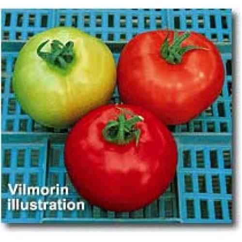 joker-f1 tomate determinate Vilmorin
