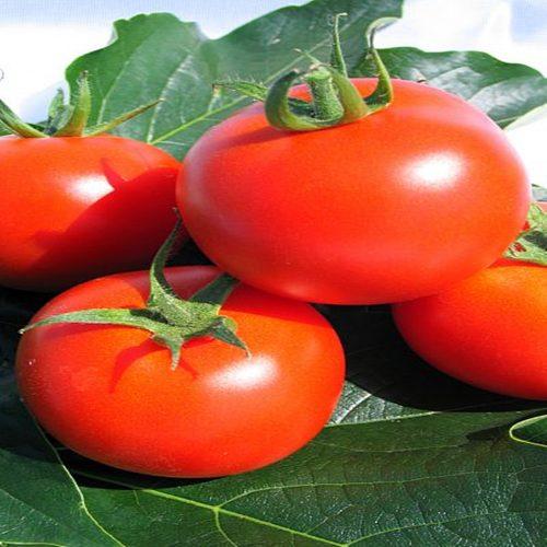 korall tomate determinate Zki