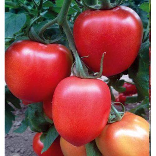 Millonety (Peradur) F1 seminte tomate-nedeterminate Yuksel