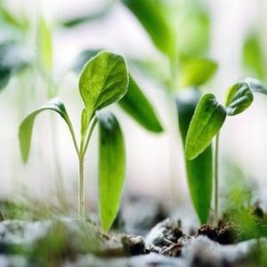 Biostimulatori, bioregulatori si corectori de microelemente