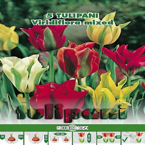 Lalele Viridiflora Mixtura