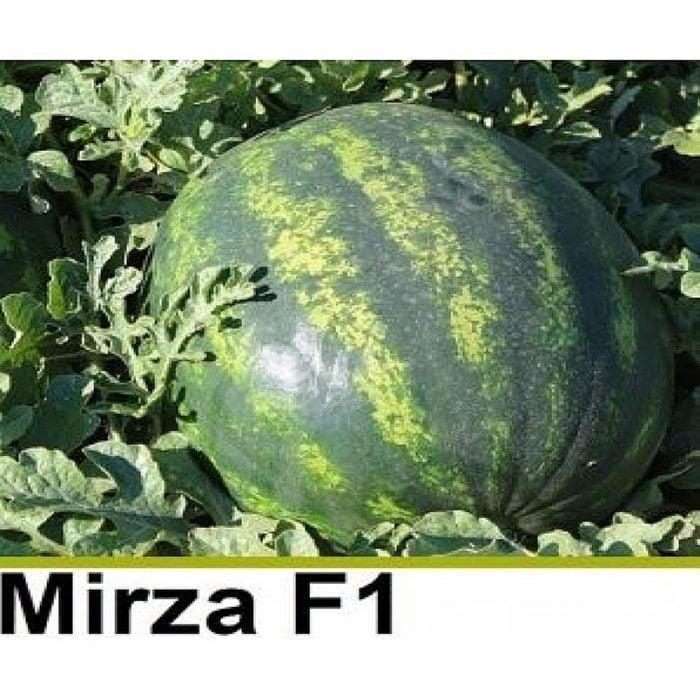 Depozitul de Seminte Mirza F1