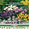 Depozitul de Seminte Crocus Chrysanthus Mixed