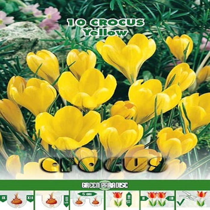 Depozitul de Seminte Crocus Yellow