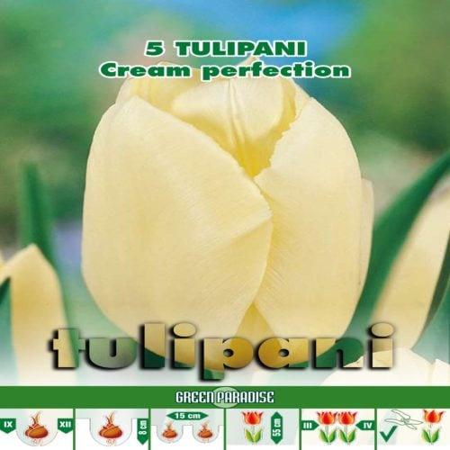 Depozitul de Seminte Tulipani Cream Perfection