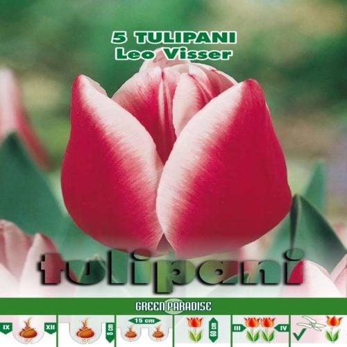 Depozitul de Seminte Tulipani Leo VIsser