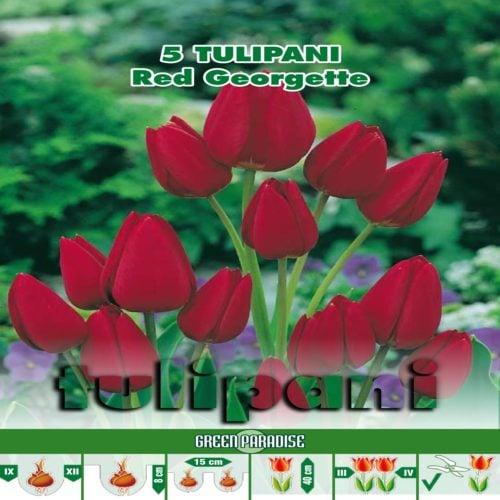 Lalele multiflora Red Georgette