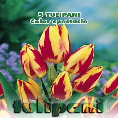 Depozitul de Seminte Tulipani Color Spectacle