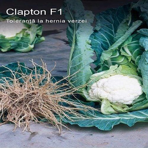 clapton-f1 seminte conopida Syngenta