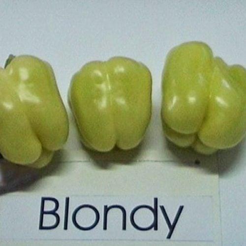 Depozitul de Seminte Blondy F1