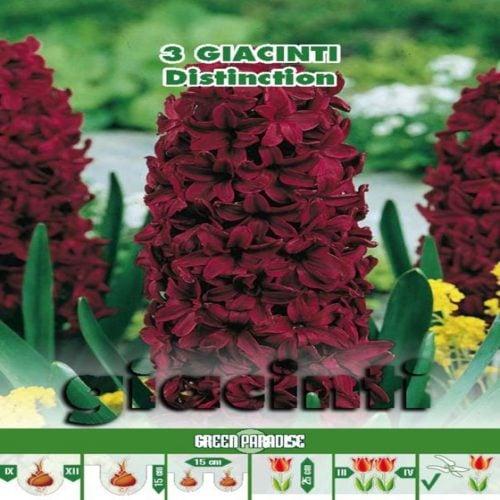 Depozitul de Seminte Giacinti Distinction