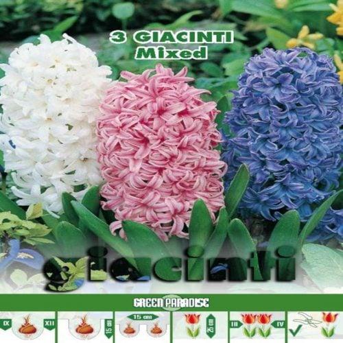 Depozitul de Seminte Giacinti-Mixed