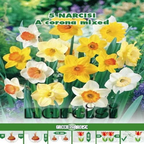 Narcise Trumpet Large Cupped Mix