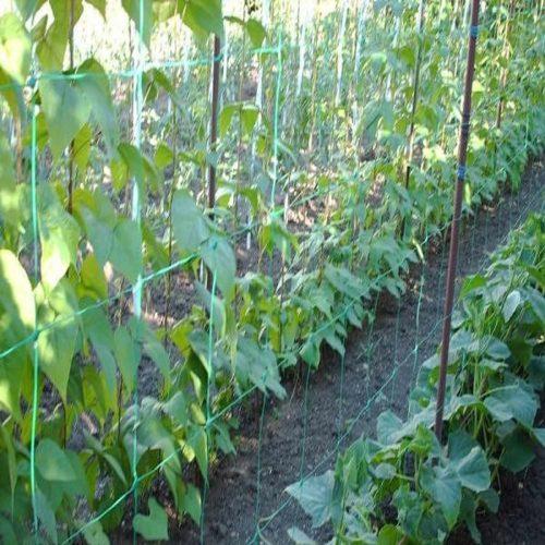 Plasa pentru plante cataratoare Stocker