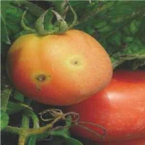 Patarea frunzelor si basicarea fructelor